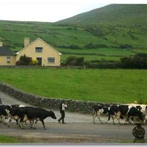Information about Farmhouse Accommodation on the Dingle